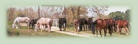 Horses of Bryn Dar Farm
